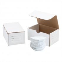 24 2-MODEL STORAGE BOXES