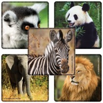 Favourite Animals Stickers