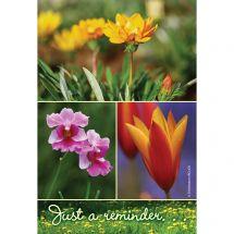 Wildflower Reminder Recall Cards