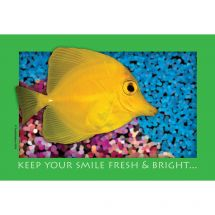 Fresh & Bright Fishy Recall Cards