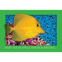 Fresh & Bright Fishy Recall Cards