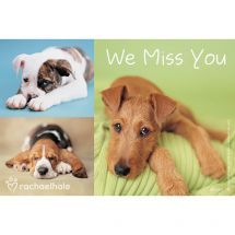 Rachael Hale Dogs We Miss You Recall Cards
