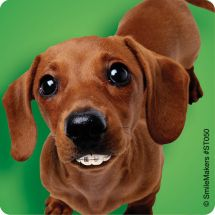 Dogs With Braces Dental Stickers