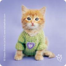 RACHAEL HALE CATS STICKERS