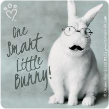 Rachael Hale Moustaches & Glasses