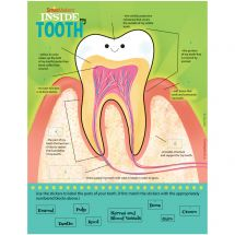 Parts of a Tooth Sticker Activity She