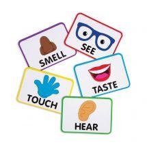 Jumbo Five Senses Magnets Set